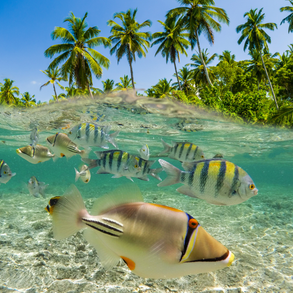 Travel Pacific Islands