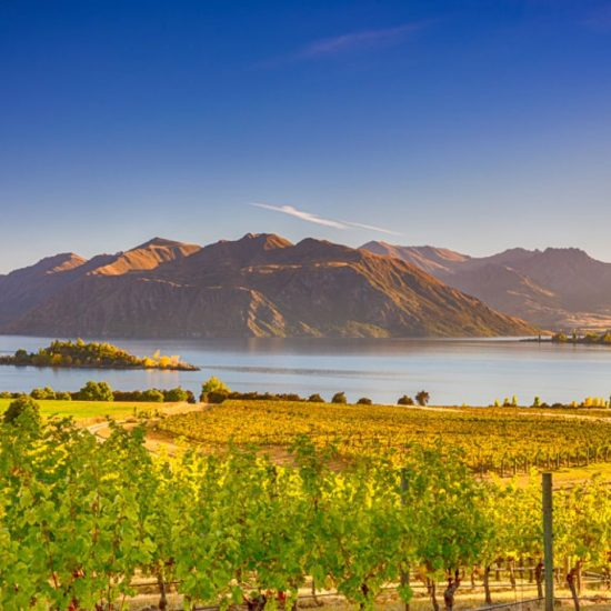 12 Day Food & Wine Tour of New Zealand